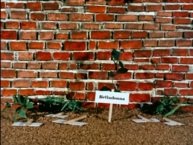 The Herb Garden from The Herbs: Belladonna The Witch (BBC1, 1968).